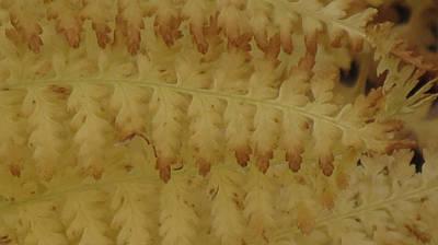 Butter Ferns Poster