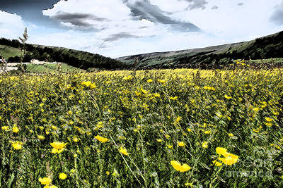 Buttercups Meadows Poster by Sandra Cockayne
