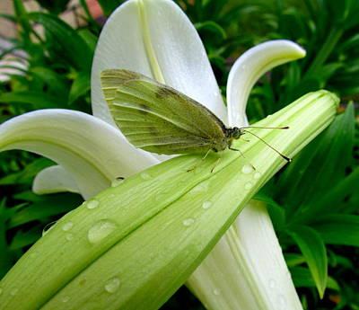 Butterflie Taking A Rest Poster