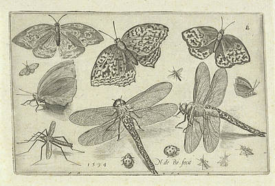 Butterflies And Dragonflies, Nicolaes De Bruyn Poster by Nicolaes De Bruyn