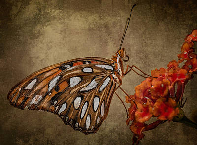 Poster featuring the photograph Butterflies Are Free by Linda Karlin