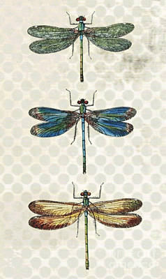 Butterflies In Different Colors Vintage With Dots Background Poster by Art World