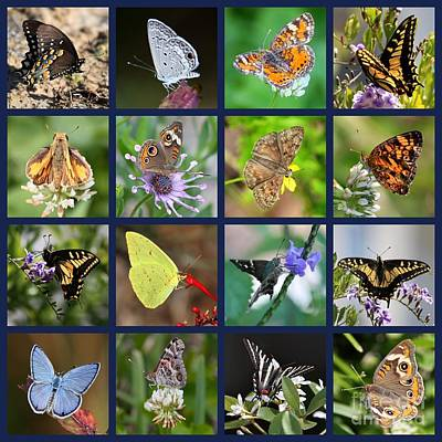 Butterflies Squares Collage Poster by Carol Groenen