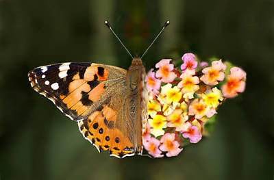 Butterflower Poster