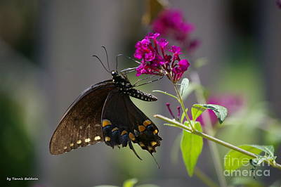 Poster featuring the photograph Butterfly 1 by Tannis  Baldwin