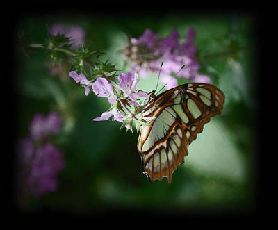 Poster featuring the photograph Butterfly 7 by Leticia Latocki