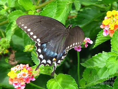 Butterfly Ballot Poster by Greg Patzer