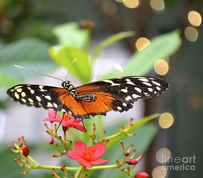Poster featuring the photograph Butterfly Beauty by Carla Carson