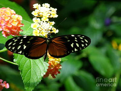 Butterfly Poster by Bev Conover