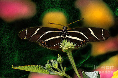 Poster featuring the digital art Butterfly Garden 06 - Zebra Heliconian by E B Schmidt