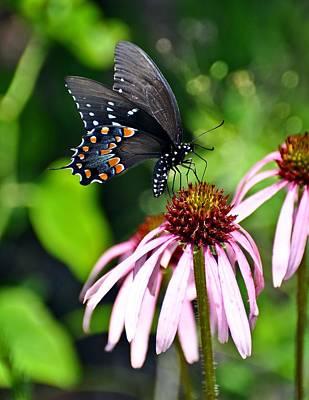 Butterfly In Black Poster by Marty Koch