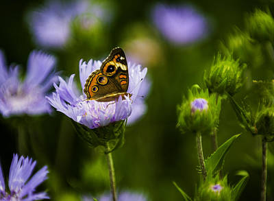 Butterfly In Field Poster
