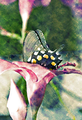 Butterfly In Flower Poster