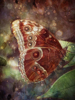 Poster featuring the photograph Butterfly In My Garden by Barbara Orenya
