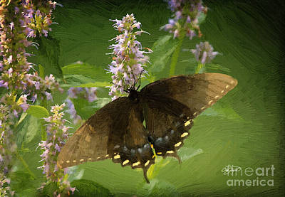 Butterfly In Oil Poster by Cris Hayes