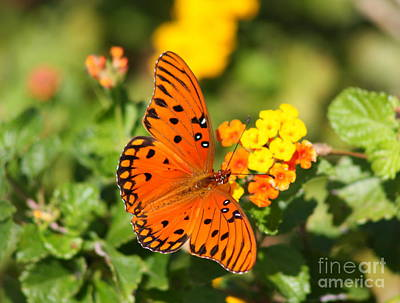 Butterfly In The Glades - Gulf Fritillary Poster by Christiane Schulze Art And Photography