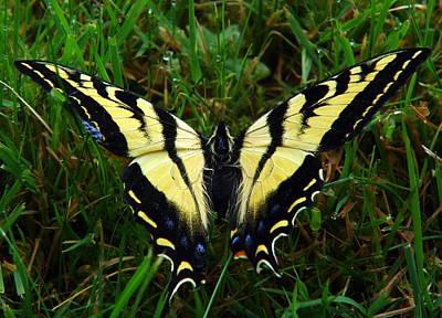Butterfly Poster by Jeri lyn Chevalier