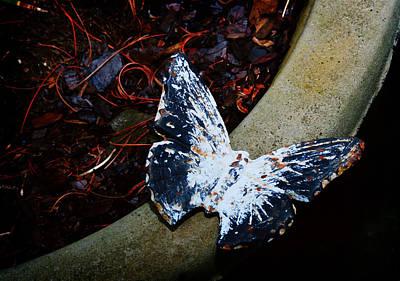 Butterfly Poster by Kara  Stewart