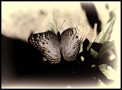 Poster featuring the photograph Butterfly Kisses by Oscar Alvarez Jr