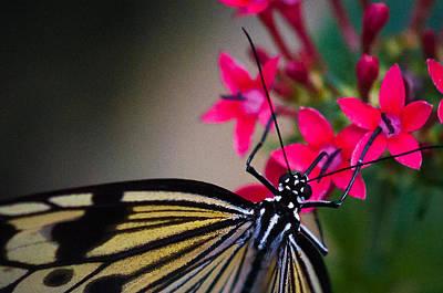 Butterfly Poster by Matt Owen