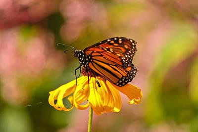 Butterfly Monet Poster