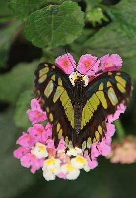 Butterfly Of Love Poster by Bill Woodstock