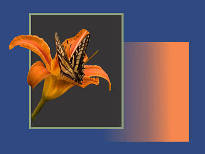 Butterfly On Day Lily Poster