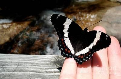 Butterfly On Fingertips Poster