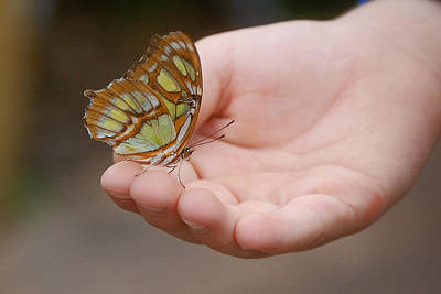 Poster featuring the photograph Butterfly On Hand by Leticia Latocki