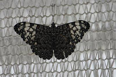 Poster featuring the photograph Butterfly On Net by Bill Woodstock