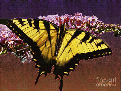 Yellow Tiger Swallowtail Butterfly Poster by Carol F Austin
