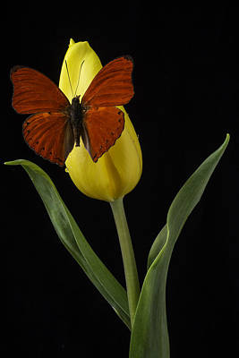 Butterfly Resting On Yellow Tulip Poster