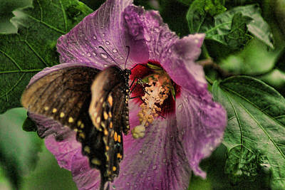 Butterfly Slurpy Poster by Rick Friedle