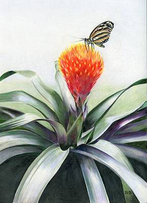 Butterfly Sunning In Costa Rica Poster