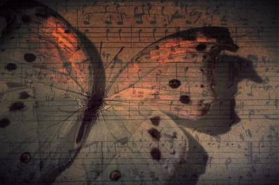 Butterfly Sunset Symphony Poster by Marianna Mills