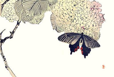 Butterfly Woodblock By Watanabe Seitei Poster by Robert Jensen