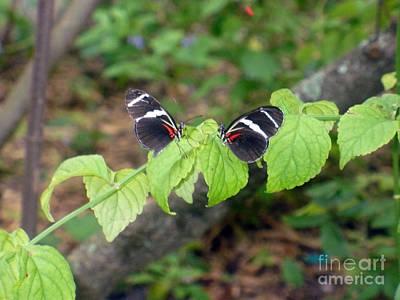 Butterfly2 Poster by Kryztina Spence