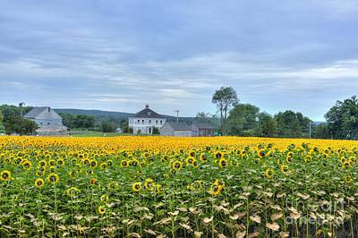 Buttonwood Sunflower Farm Poster