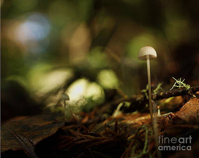 C Ribet Mushroom And Fungi Art Mute Ovation Poster