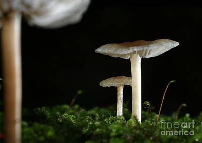 C Ribet Mushroom And Fungi Art Pearl Poster