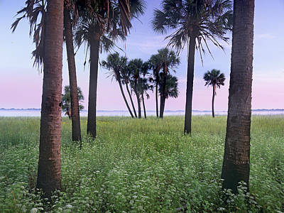 Cabbage Palm Meadow Florida Poster by Tim Fitzharris