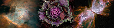Cabbage With Butterfly Nebula Poster