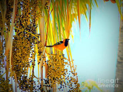 Cabo Oriole Poster