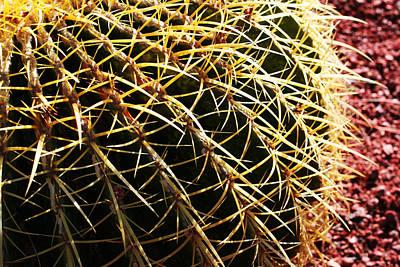 Cactus 10 Poster