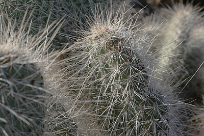 Cactus 12 Poster