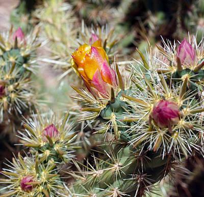 Cactus 17 Poster