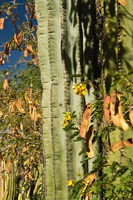 Cactus And Bean Pods Poster