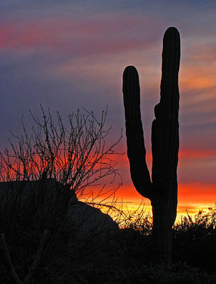 Poster featuring the photograph Cactus At Sunset by Marcia Socolik