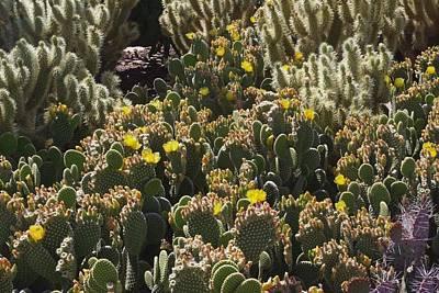 Cactus Carpet Poster
