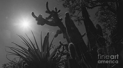 Poster featuring the photograph Cactus Family - 2 by Kenny Glotfelty